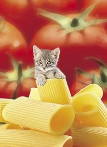 Clementoni Puzzle 500 Talianska mačka