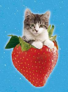 Clementoni Puzzle 500 Jahodová mačička