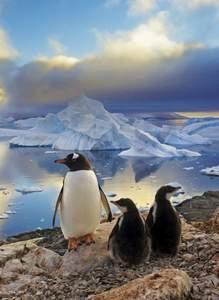 Clementoni Puzzle 500 Penguins