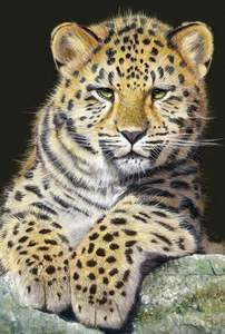 Schmidt Puzzle 500 Malý leopard