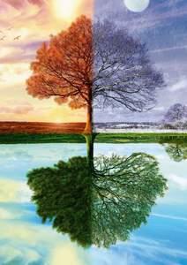 Schmidt Puzzle 500 The seasons tree